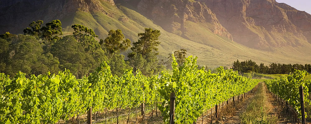 South African Winery Venues COnferences