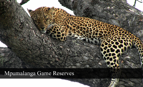 Mpumalanga Game Reserves